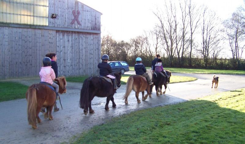Cours-baby-poney-7-800x512