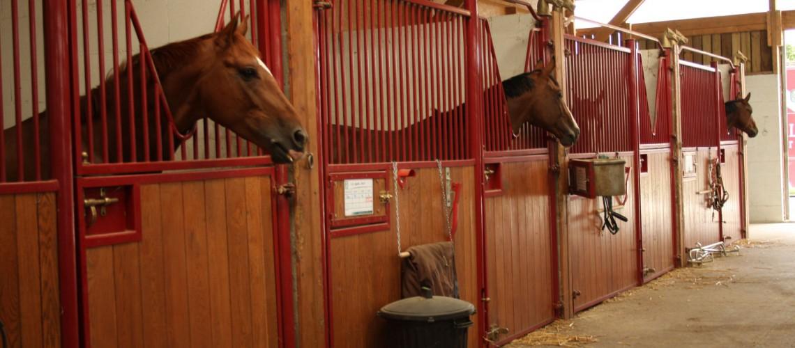 Pensions de chevaux et poneys